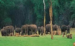 Kerala Tour From Mumbai