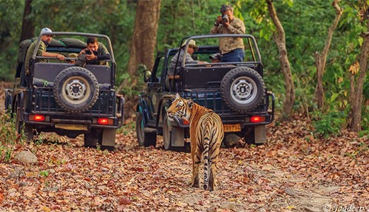 Jim Corbett National Park Overview
