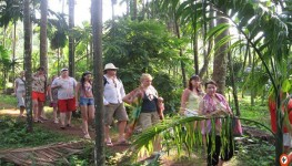 Full Day Spice Plantation Tour in Goa