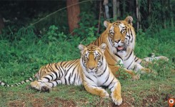 Private day excursion to Bannerghatta National Park with Safari
