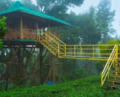 Tree House And Backwater Houseboat tour