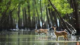 Sunderbans Day Tour