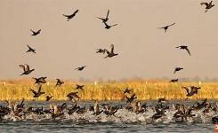 Nal Sarovar Bird Sanctuary Tour