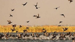 Nal Sarovar Bird Sanctuary Tour