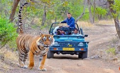 Private Jaipur To Ranthambore Tour Package