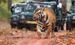 Bandhavgarh Tour With Meals And Jungle Safari