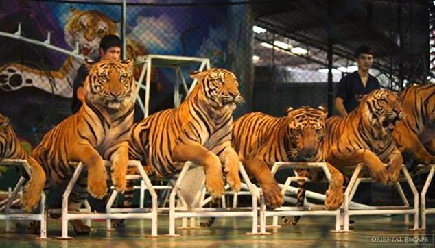 Sriracha Tiger Zoo With Private Transfers