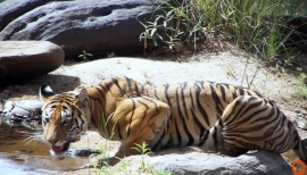 Jaipur To Ranthambore Tour Package