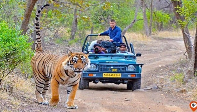 Ranthambore Jungle Safari Tour