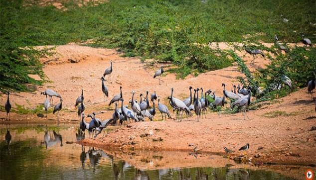 Bishnoi Village Safari With Rajasthani Lunch