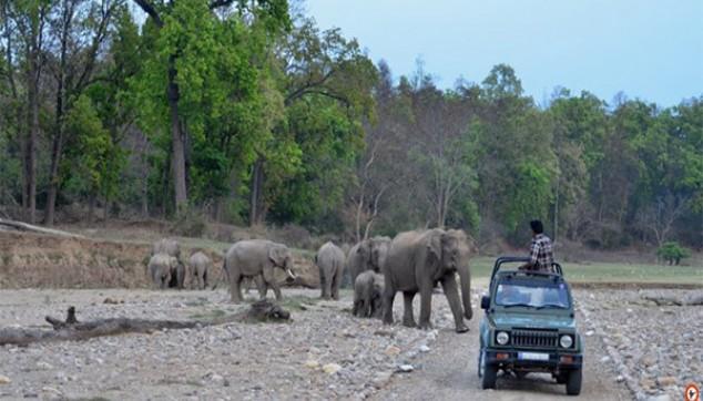 Jungle Safari In Rajaji National Park