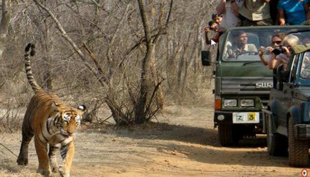 Rajaji National Park in Uttarakhand
