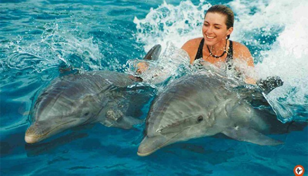 Dolphin watching tour of 3 hours