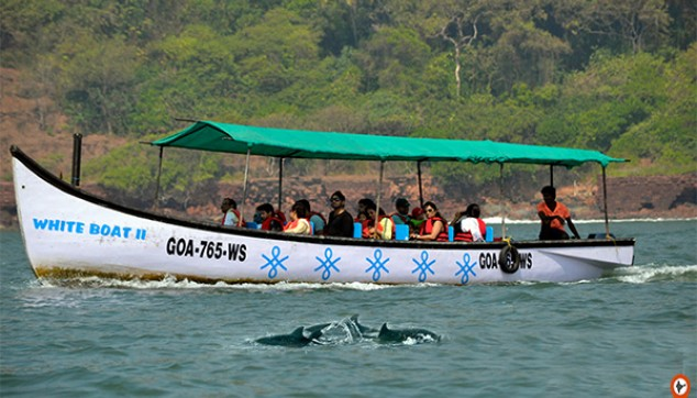 Fun Filled Day Excursion In Goa