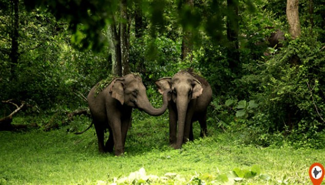 3 Days Private Wayanad Tour From Cochin