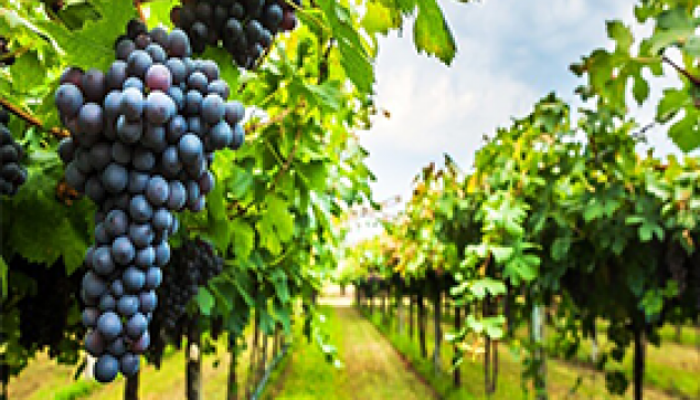 Wine Tasting Tour In Bangalore