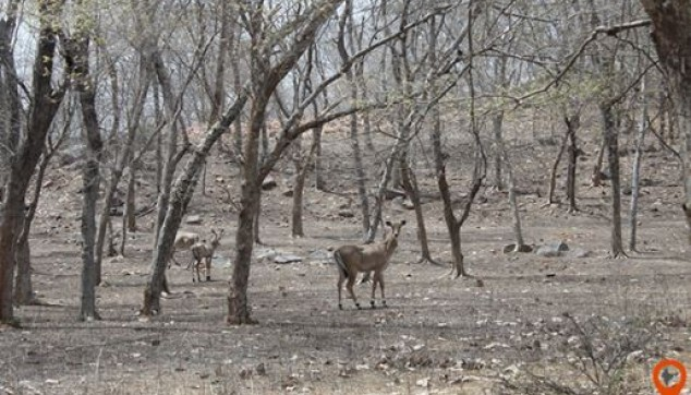 panna national park best time visit