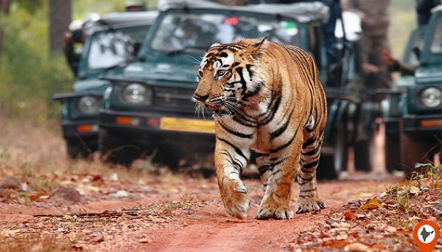 Bandhavgarh Tour With Meals And Jungle Safari